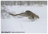 20130119 525 Great Gray Owl.jpg