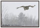 20130119 077 SERIES -  Great Gray Owl.jpg