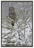 20130119 116 Great Gray Owl.jpg