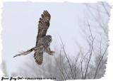 20130128 179 Great Gray Owl.jpg