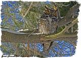 20130323 089 Great Horned Owl.jpg
