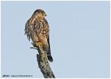 20130126 011 Merlin.jpg