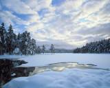Snow Mallow