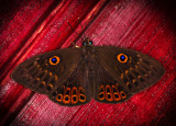 Butterfly on deck ceiling