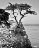 Monterey09_107masternik.jpg