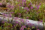 Flores de temporada adornan las vistas en el camino