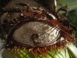 IMG_3279  eye.jpg