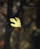 One Little Leaf