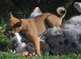 Park Puppy and Juliet
