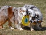 More Frisbee Fun