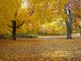 Who's Gonna Pick Up All These Leaves!!!!
