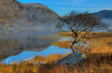 Lonely tree at Llyn Dinas.jpg
