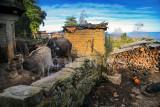 Village scene, QingKou