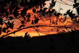 Sunset Lao Ying Zhui