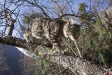 Tiger up a tree