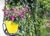 Flowers in yellow pot.jpg