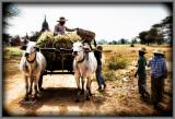 Loading the Wagon