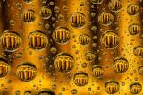 Gold Award Macro, http://www.swpp.co.uk/image_competition-2012/Upg/winnerspg02.htm