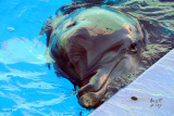 dolphinbn0190_Bottlenose Dolphin