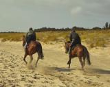 horses on training gallop 1.jpg