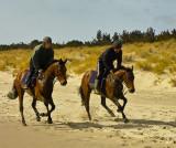 horses in training 2.jpg