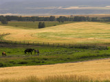 Afternoon Pasture