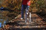 Autumn On The Board Walk