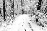 Snowy Hiking Trail