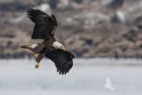 Eagle 14 pb.jpg