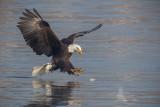 Eagle 18 pb.jpg