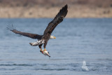 eagle 16 pb.jpg