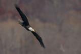 eagle 19 pb.jpg
