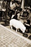 sheep art