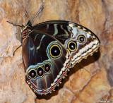 Schmetterling Haus (Butterfly House)