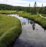 Salmonier Nature Park 046