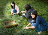 Cutting Grass