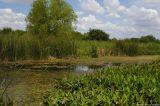 August 22nd, 2006 - Pond 1622