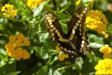 Butterfly 1743.jpg