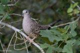 August 26th, 2006 - Bird 1905