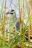 August 29th, 2006 - Bird 2302