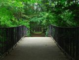 Footbridge To The Woods