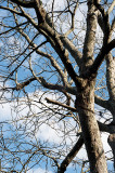 A Branchy Tree