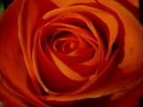 flowers__blommor