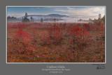 Cranberry Glades AM 1.jpg
