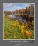 Autumn Ferns Hills Creek Pond.jpg