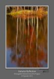 Autumn Reflection Hills Creek Pond.jpg