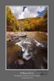 Williams River Autumn 4.jpg