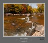 Williams River Autumn 5.jpg