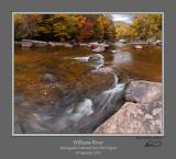 Williams River Autumn 5b.jpg