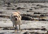 Running at Greenore
